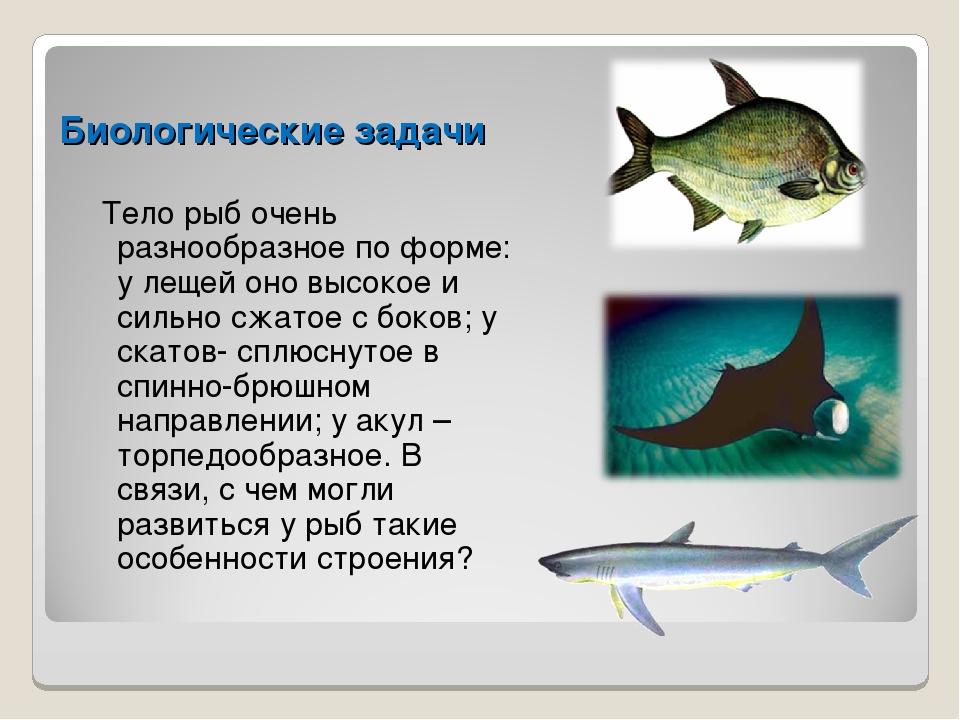 Биологические задачи Тело рыб очень разнообразное по форме: у лещей оно высок...