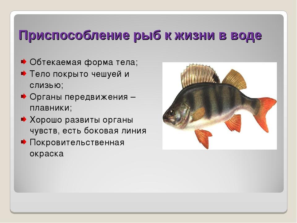 Приспособление рыб к жизни в воде Обтекаемая форма тела; Тело покрыто чешуей...