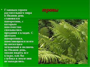 травы Главным героем растительного мира в Иванов день становился папоротник,