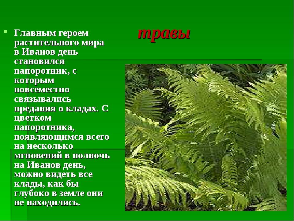 травы Главным героем растительного мира в Иванов день становился папоротник,...