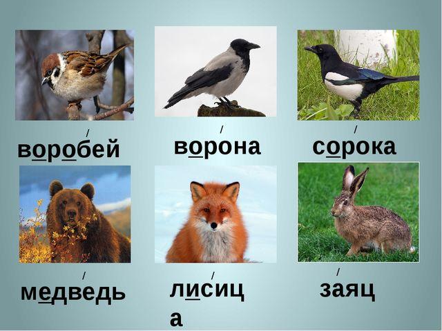 воробей / ворона / сорока / медведь / лисица / заяц /