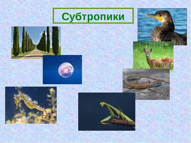 Субтропики