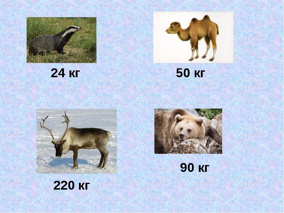 24 кг 50 кг 220 кг 90 кг
