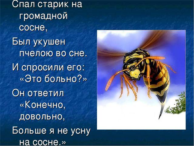 Спал старик на громадной сосне, Был укушен пчелою во сне. И спросили его: «Эт...