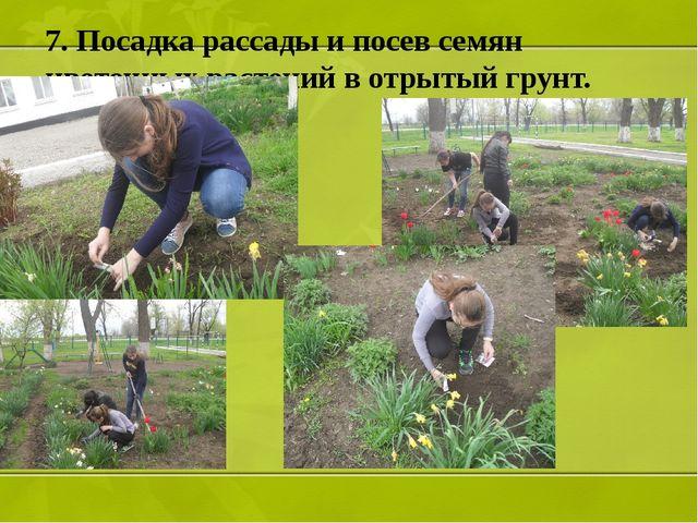 7. Посадка рассады и посев семян цветочных растений в отрытый грунт.