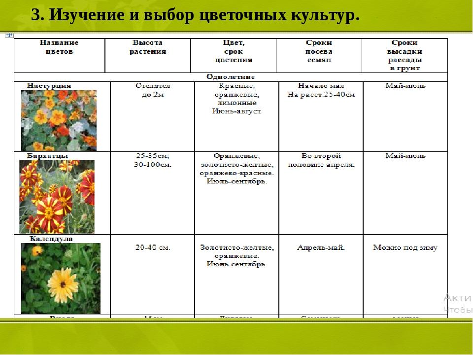 3. Изучение и выбор цветочных культур.