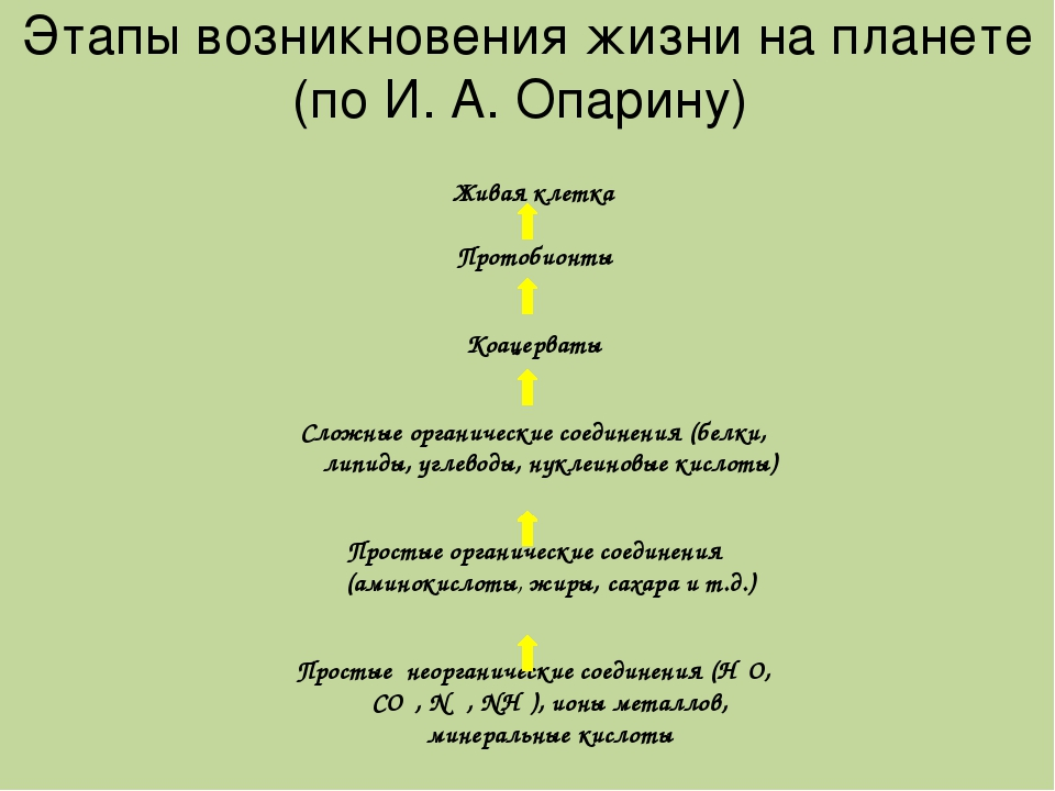 Этапы возникновения жизни на планете (по И. А. Опарину) Живая клетка Протобио...