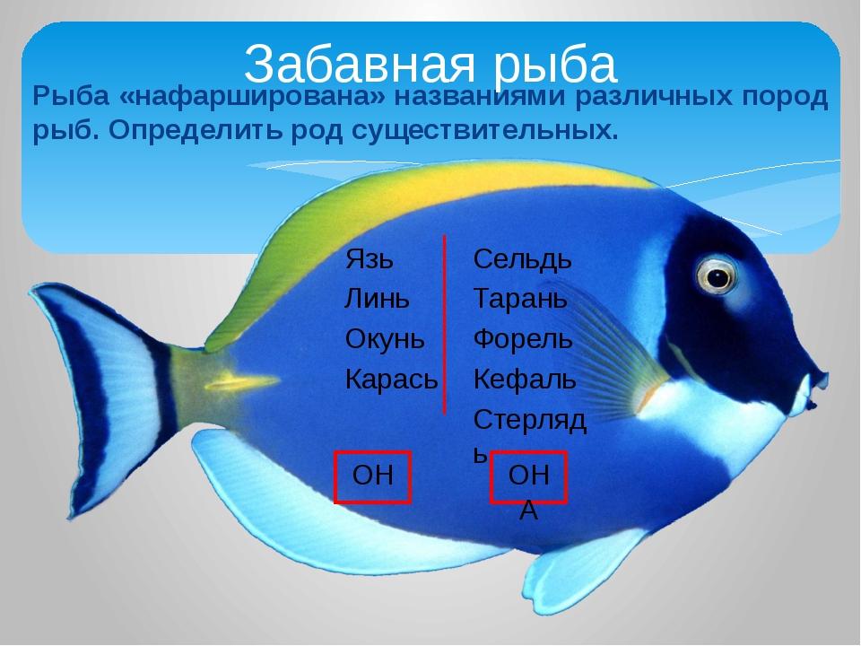 Рыба «нафарширована» названиями различных пород рыб. Определить род существит...