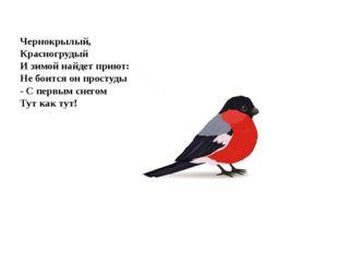 Чернокрылый, Красногрудый И зимой найдет приют: Не боится он простуды - С пе