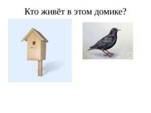 Кто живёт в этом домике?