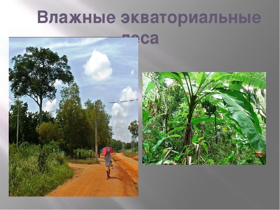 Влажные экваториальные леса