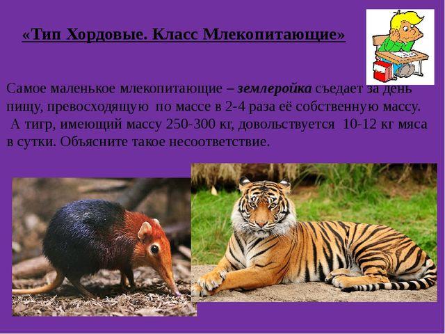 «Тип Хордовые. Класс Млекопитающие» Самое маленькое млекопитающие – землеройк...