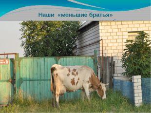 Наши «меньшие братья» «Уж как я ль мою коровушку люблю»