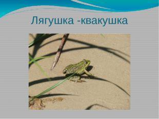 Лягушка -квакушка