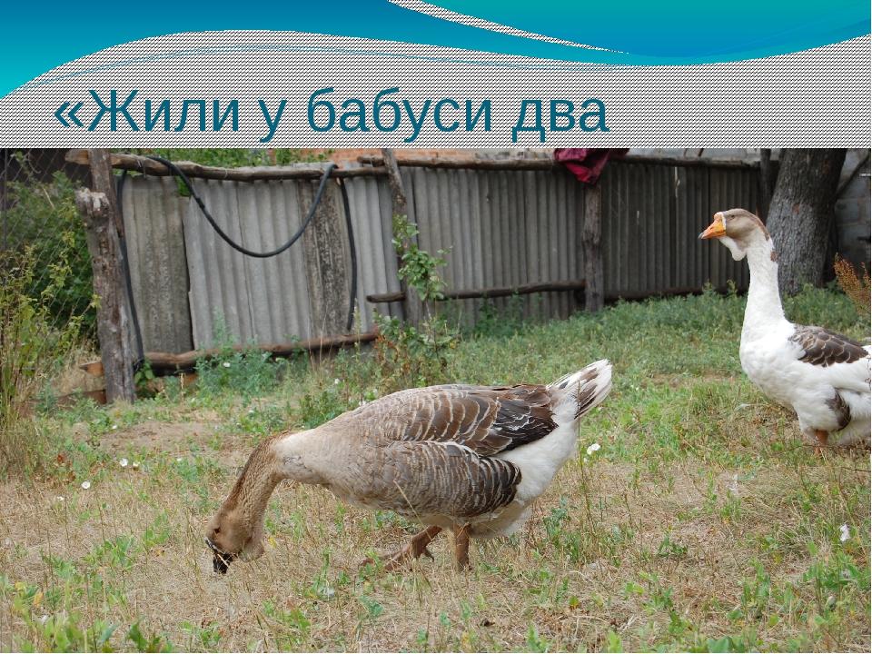«Жили у бабуси два весёлых гуся»