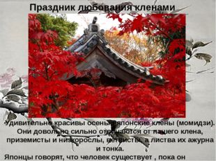 Праздник любования кленами Удивительно красивы осенью японские клены (момидзи