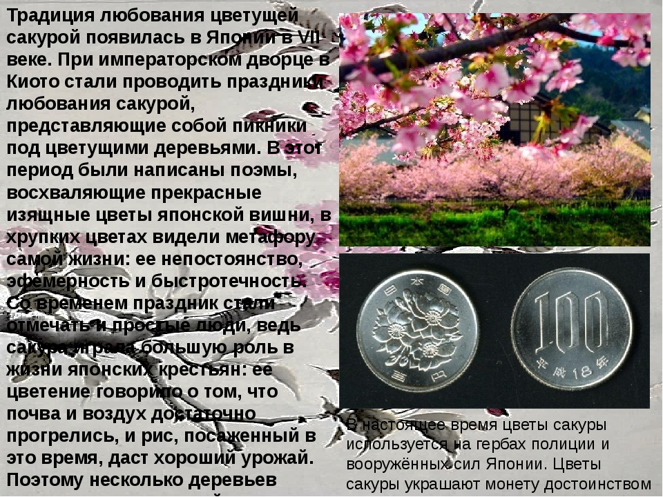 Традиция любования цветущей сакурой появилась в Японии в VII веке. При импера...
