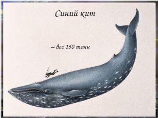 Звірі Синій кит - вага 150 тон Синий кит – вес 150 тонн