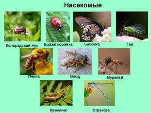 Насекомые Колорадский жук Божья коровка Тля Бабочка Пчела Овод Муравей Стреко