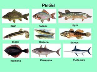 Рыбы Карп Карась Щука Вьюн Рыба-меч Бычок Кефаль Камбала Ставрида