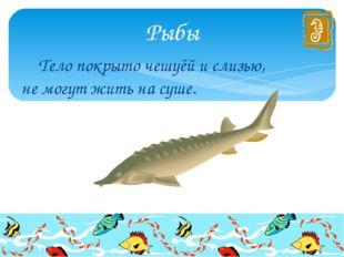 Тело покрыто чешуёй и слизью, не могут жить на суше. Рыбы