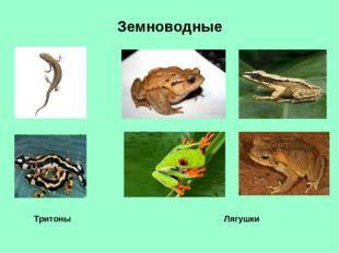 Земноводные Тритоны Лягушки