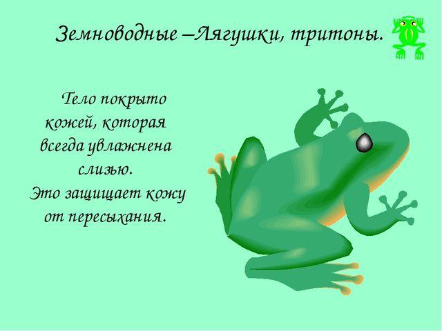 Земноводные –Лягушки, тритоны. Тело покрыто кожей, которая всегда увлажнена с...