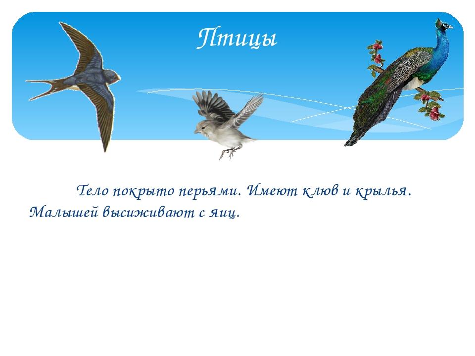 Тело покрыто перьями. Имеют клюв и крылья. Малышей высиживают с яиц. Птицы