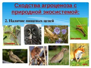 Сходства агроценоза с природной экосистемой: 2. Наличие пищевых цепей филин п