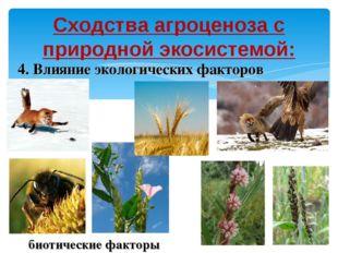 Сходства агроценоза с природной экосистемой: 4. Влияние экологических факторо