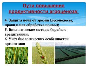 Пути повышения продуктивности агроценоза: 4. Защита почв от эрозии (лесополос