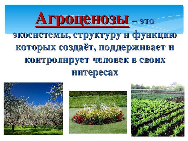 Агроценозы – это экосистемы, структуру и функцию которых создаёт, поддерживае...