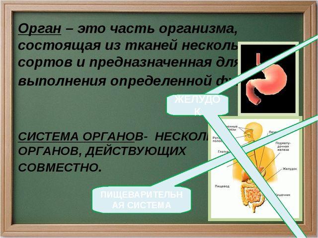СИСТЕМА ОРГАНОВ- НЕСКОЛЬКО ОРГАНОВ, ДЕЙСТВУЮЩИХ СОВМЕСТНО. Орган – это часть...