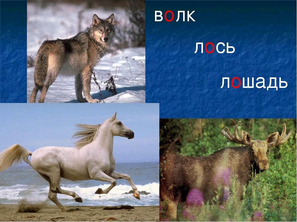 волк лось лошадь