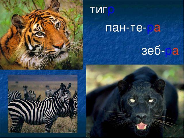 тигр пан-те-ра зеб-ра
