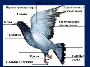 Виды перьев