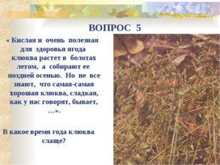 « Кислая и очень полезная для здоровья ягода клюква растет в болотах летом,