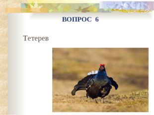 Тетерев ВОПРОС 6