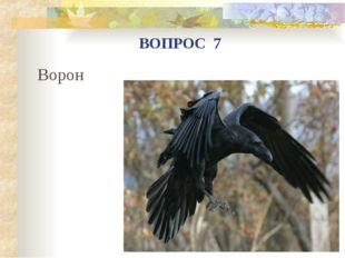 Ворон ВОПРОС 7