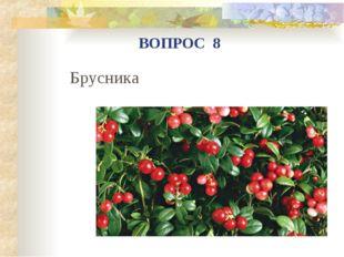 Брусника ВОПРОС 8