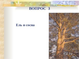 Ель и сосна ВОПРОС 3