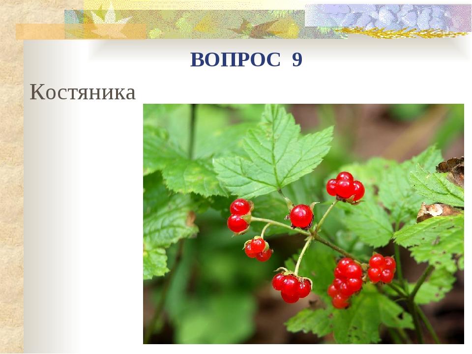 Костяника ВОПРОС 9