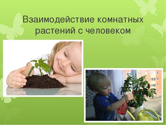 Взаимодействие комнатных растений с человеком