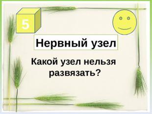 4 В какой раковине никто не живёт?