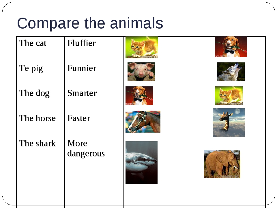 Compare the animals The cat Te pig The dog The horse The shark Fluffier Funn...