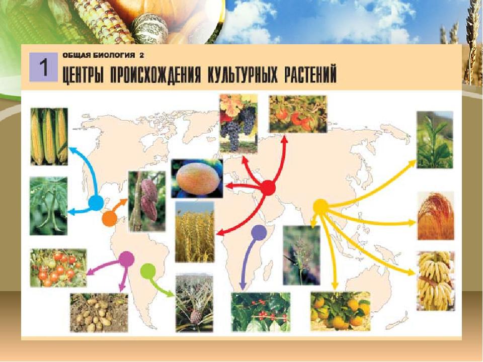 какие культурные растения выращивали в древние времина условиях