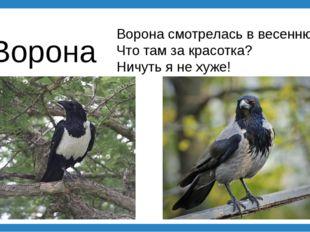 Ворона Ворона смотрелась в весеннюю лужу: Что там за красотка? Ничуть я не ху
