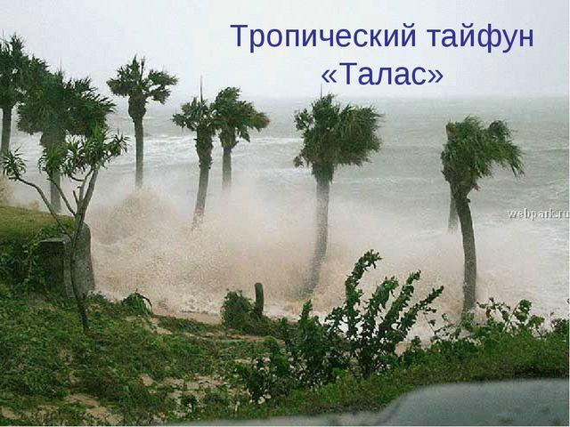 Тропический тайфун «Талас»