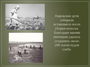 Кировские дети собирали оставшиеся после уборки колосья. Благодаря нашим пион