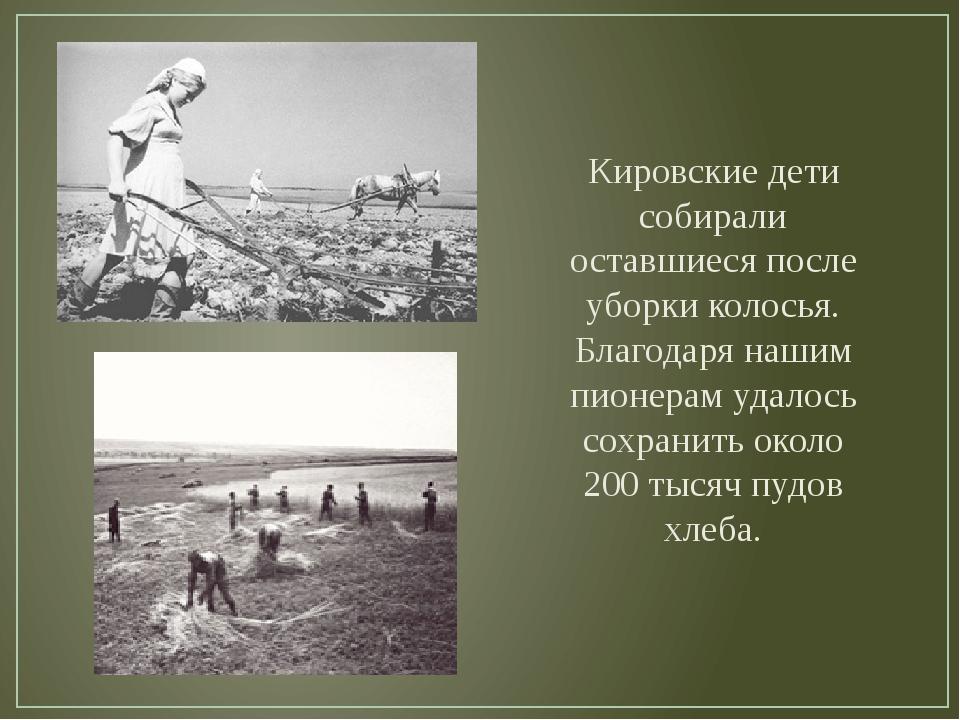 Кировские дети собирали оставшиеся после уборки колосья. Благодаря нашим пион...